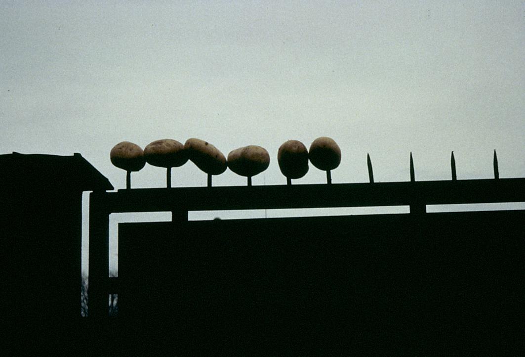 ACTIONS-PEU-12-patates-piques.jpg